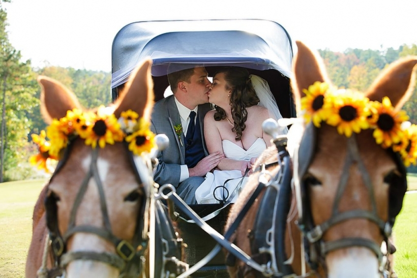 bride and groom with miniature donkeys